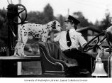 Fireman and his dalmation on a vintage fire truck, at the Lake City Seafair Parade in Seattle,...