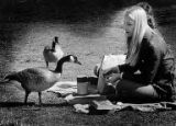 Picnickers Charles Webb and Gretchen Wigton feeding Canadian Geese at the University of Washington...