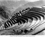 Water-filled terraces for rice production, Java, ca. 1921