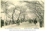 People promenading along street lined with cherry trees, Mukojima area, Tokyo, Japan, n.d.
