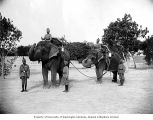 Indian soldiers and elephants, Multan, 1898