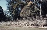 Elephant procession in relief on stone wall, Elephant Terrace, Angkor Thom, Cambodia, ca....