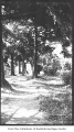 Path in old Bellevue, ca. 1925