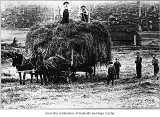 Hay wagon on Stidl farm near Issaquah, ca. 1900