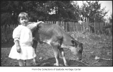 Phyllis Hill with Beauty the calf, Bellevue, ca. 1918