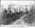 Eight horse team hauling logs, Redmond, 1905