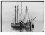 Alice, Joseph Russ and La Paloma, moored in a harbor, n.d.
