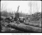 Yarding logs with a steam donkey, April 11, 1903