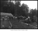 Horse team in logging camp, ca. 1902