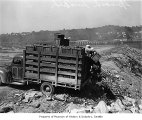 Truck unloading crates of spinach at dump, Seattle, 1944