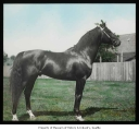 Horse on Willowmoor Farm, Redmond, n.d.