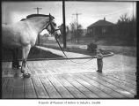 Boy with fire department horse, Seattle, ca. 1920