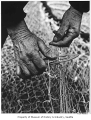 Fisherman's hands, Seattle, 1953