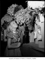 Girl among prize dahlias in the dahlia show at Green Lake fieldhouse, Seattle, 1961