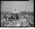 Workers harvesting cabbage near Kent, October 25, 1943