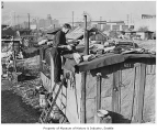 Edwin Hill repairing roof of shack in Hooverville, Seattle, November 1939
