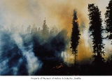 Forest fire in the Cascade Mountains, 1984