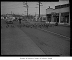 Geese crossing street near Green Lake, Seattle, 1945