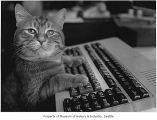 Morris the cat at the Seattle Post-Intelligencer office, Seattle, December 1981