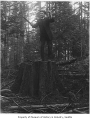 Edward Nolan on stump, Seattle, ca. 1910
