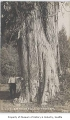 Man next to large cedar tree, near Fall City, n.d.