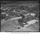 Aerial of Vashon and nearby farms looking northeast, 1946