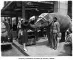 "Elephant ""Miss Mona"" gives a newspaper to a young woman outside the Seattle Post-Intelligencer..."