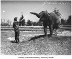 Wide Awake, a female Asian elephant, gets a hose-down from a zookeeper at Woodland Park Zoo,...