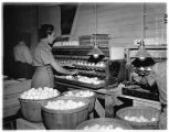 Women cleaning eggs at Hollywood Farm, Woodinville, 1935