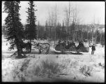 White Pass & Yukon Route sleigh, 1905