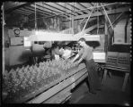 Packing glass bottles, ca. 1942