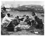 Eskimo women and girls stringing tom cod, Nome, September 5, 1905