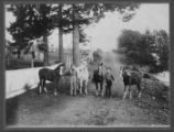 John and Ernest Dulin with horses, ca. 1914