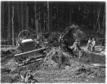 Construction workers clearing forest land at the Mud Mountain Dam project, 1940