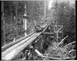 Moving a log down a trailing chute, ca. 1910