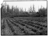 Farm and orchard at Meydenbauer Bay, ca. 1912