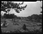 Rose Garden at Woodland Park, Seattle, June 1950