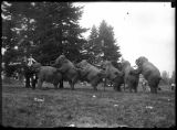 Sells-Floto Circus elephants, ca. 1912