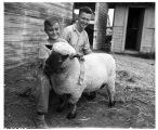 Bobby and Ernest McCullough with sheep at Yakima Fair, September 1946