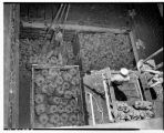 Cargo of bananas in hold of ship, June 13, 1949