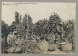 Indian hop pickers at Kent, ca. 1895
