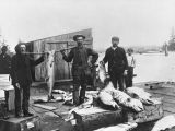Fishermen and salmon on Stanwood waterfront, ca. 1906