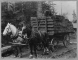 Hauling shingles on cross plank road,  1900