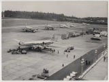 United Air Lines planes at Sea-Tac Airport, 1950