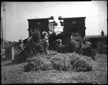 Migrant workers harvesting hay, 1944