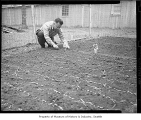 Internee planting garden at Camp Harmony, Puyallup, 1942