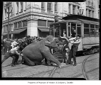 Police and Shriners trying to move an elephant in front of a streetcar on Pine Street in downtown...