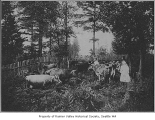 Chandler family with cows at Chandler farm, Seattle, 1908