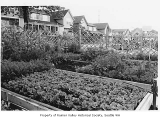 Gardens at New Holly, Seattle, September 29, 2001