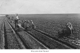 Internees working in fields at Minidoka, ca. 1943